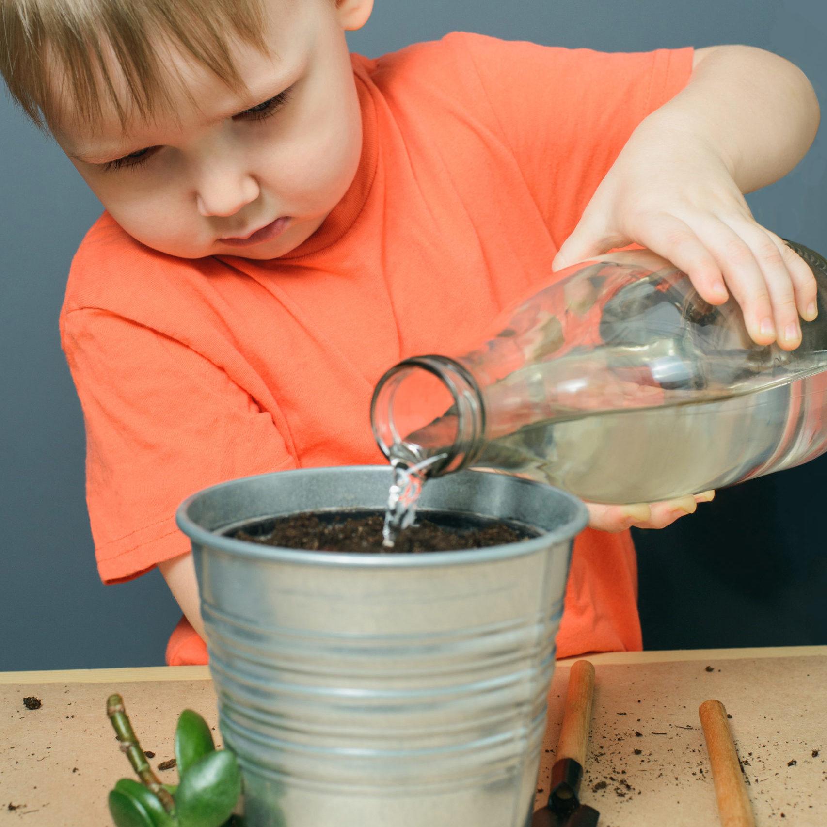 caucasian blond child boy watering ground for planting money tree plant or crassula ovata in metal flower pot, indoor gardening, stock photo image